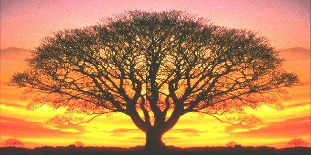 Evolutie Project: dans je levensboom